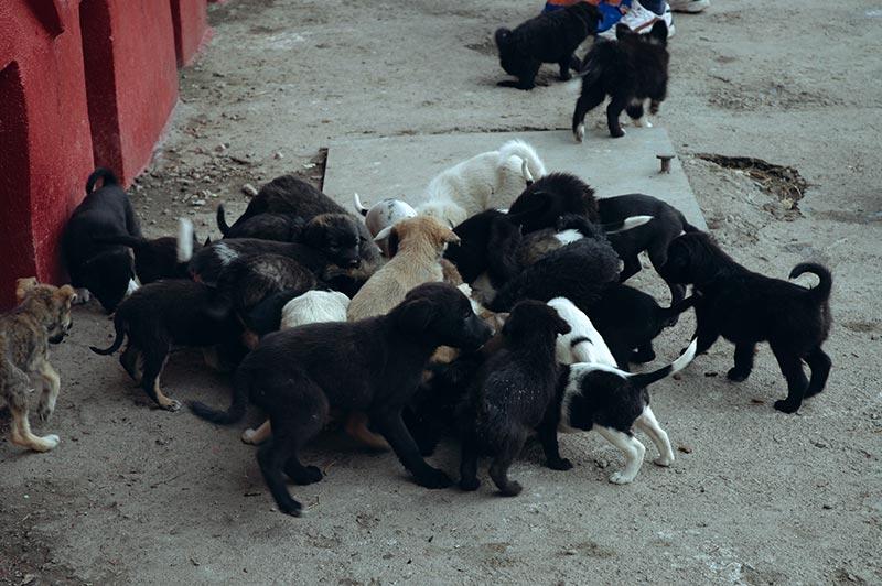 Eine Gruppe Welpen im Tierheim von Constanta