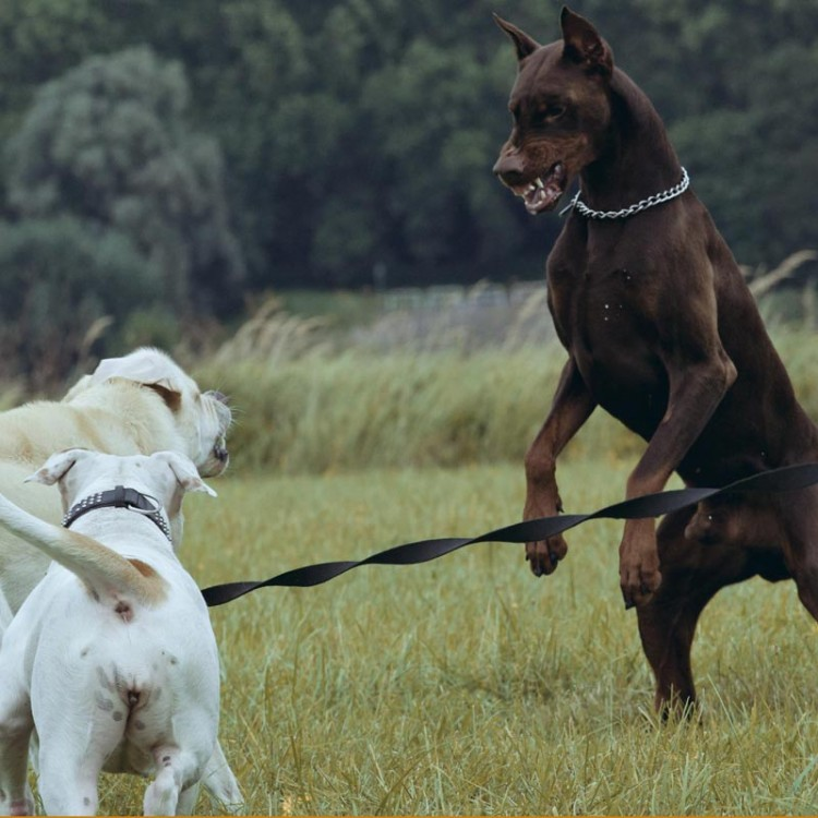 Animalstar-Problemhundetraining-01