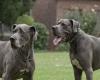 """Filmhund Leon (rechts) aus Tatort  """"Krumme Hunde"""" der ARD in der Drehpause"""