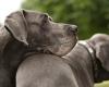 """Filmhund Leon aus dem Tatort  """"Krumme Hunde"""" der ARD in der Drehpause"""