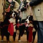 Animalstar Weihnachtsmarkt 2014
