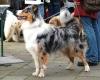 """Filmhund Pepper aus der ARD-Serie """"Verbotene Liebe"""" auf dem Hundeweihnachtsmarkt der Hundeschule animalstar in Düsseldorf"""