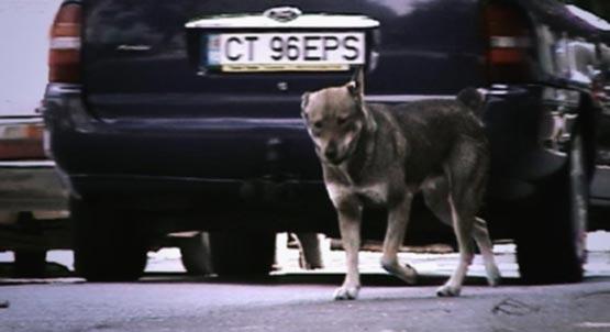 Herrenloser Hund auf den Strassen von Constanta.