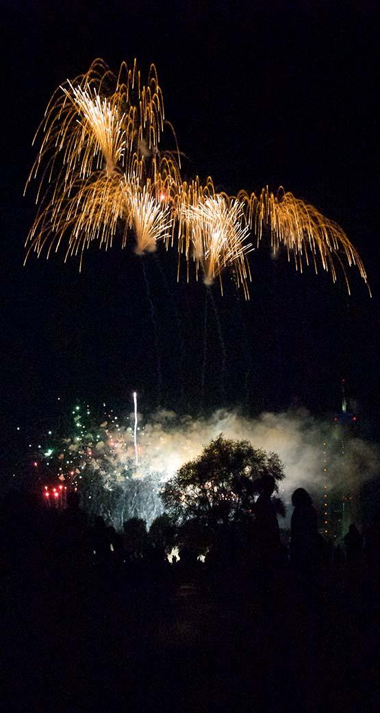 Angst der Hunde vor Feuerwerk und Knallerei ist jedes Silvester wieder ein Problem
