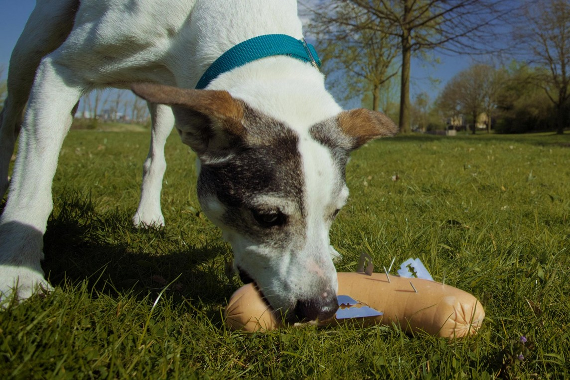 Neuer Giftköder Workshop bei Hundeschule Animalstar in Düsseldorf Lörick