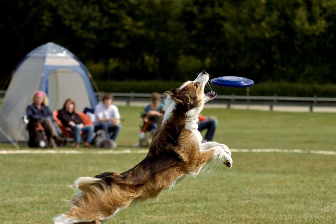 Hunde-Casting von Animalstar beim Dogfrisbee Ruhrpott Cup in Duisburg