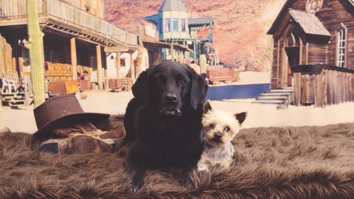 Hundefoto-Workshop bei Animalstar mit Hundetrainer Dirk Lenzen und einem Tierfotografen