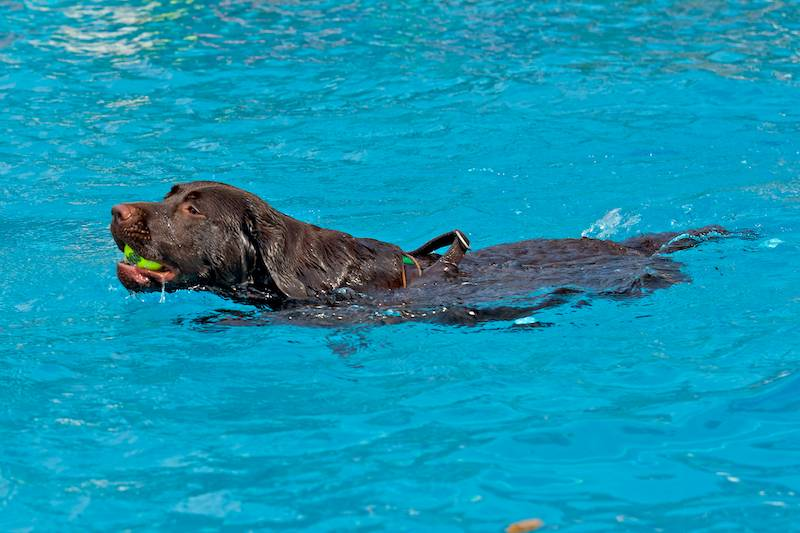 Hund Freibad
