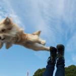 Casting Hund beim Dog Nose Day 2015 in Wesel