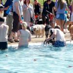 Hundeschwimmen in Düsseldorf Lörick